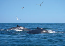 Cape Cod Private Whale Watching Cruises